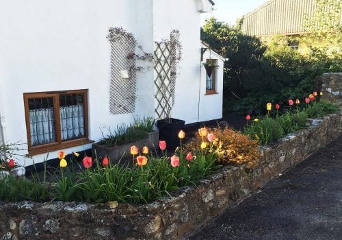 Colourful tulips line the wall of the Farm House