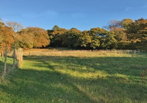 Sweepeing view of this New Forest paddock