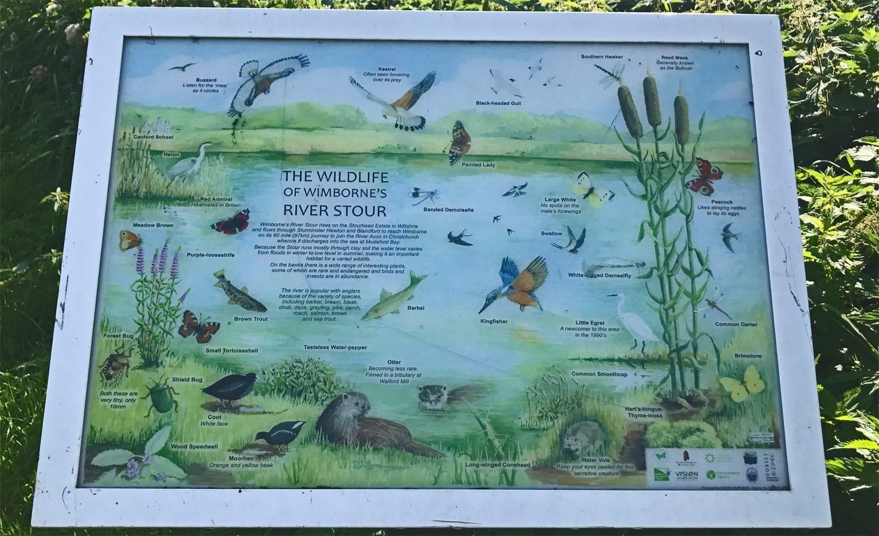 Wildlife on the River Stour