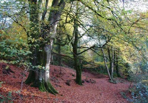 Rural retreats in Devon