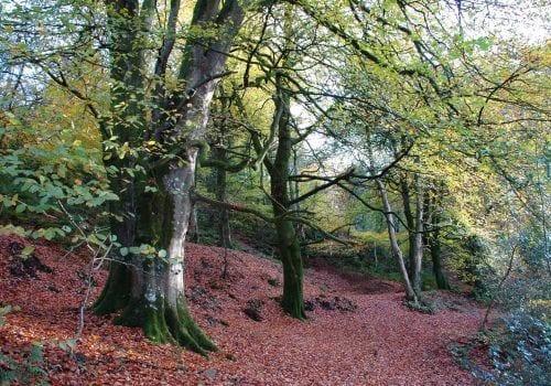 Beautiful Woodland Walks