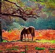 New Forest pony in the autumnal sunshine and vibrant colours surrounding
