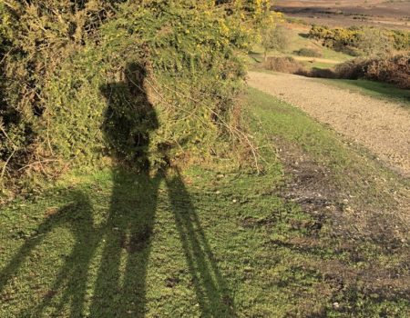 Shadow of bike whilst exploring the breathtaking views in the New Forest