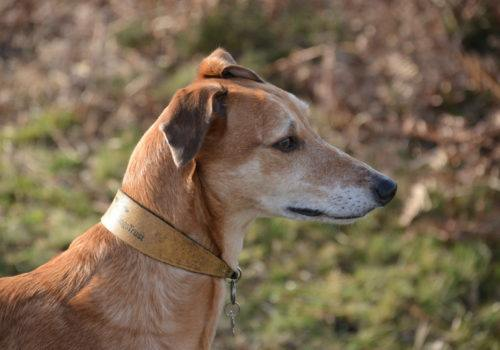 Enjoy dog walks around the local areas whilst on your self catering holiday