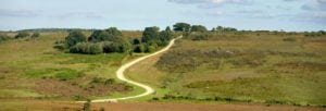 Beautiful scenic walks in the New Forest National Park