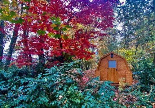 Beautiful autumnal setting for woodland glamping pod
