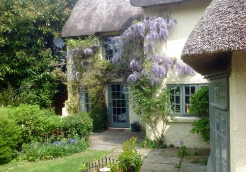 Beautiful wisteria on New Forest Thatched Cottage